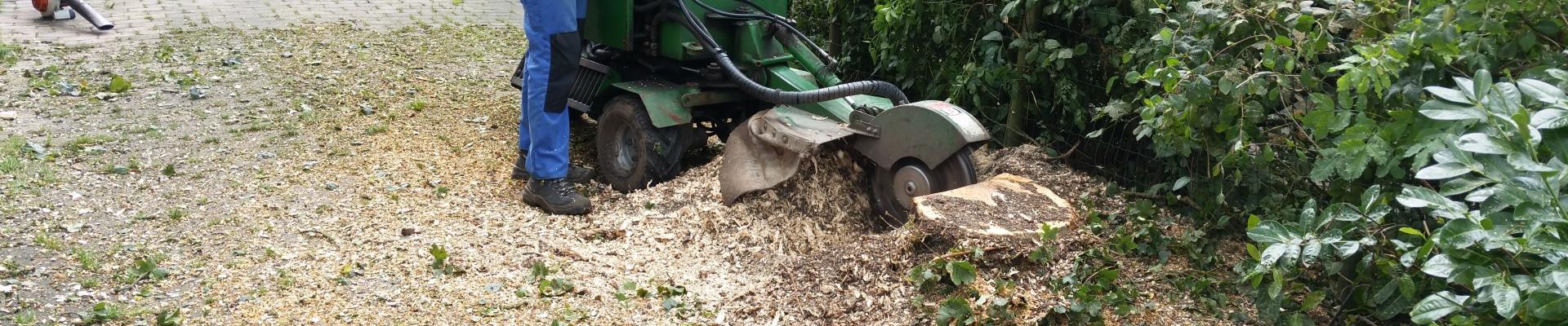 boomkap boomkapbedrijf groningen de winter