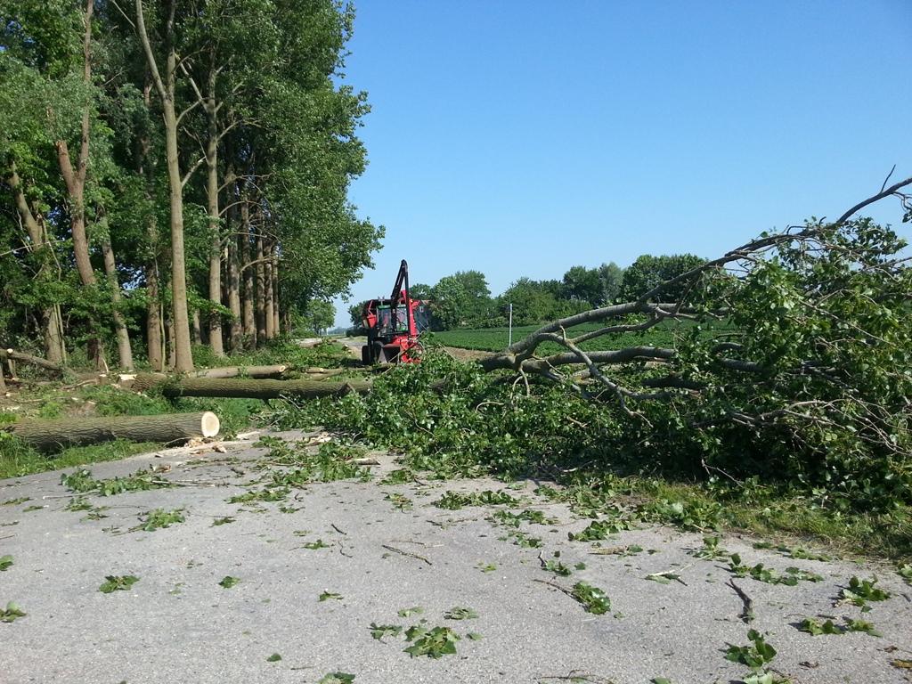 Boomkap - Boomkapbedrijf De Winter Wirdum Groningen - Bomen Kappen - Kappen van Bomen